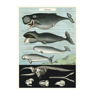 Affiche baleines - Cavallini & Co