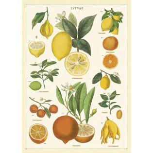 Affiche Citrons