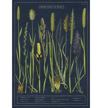 Affiche pédagogique Herbes - Cavallini & Co