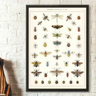 Affiche pédagogique Insectes - Cavallini & Co