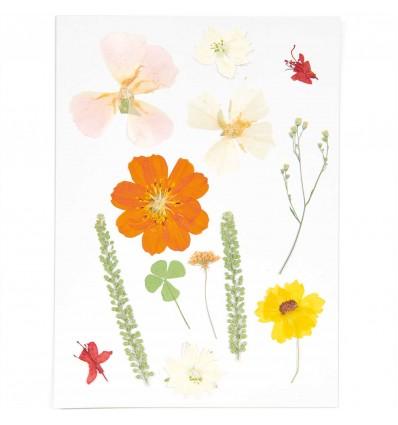 Fleurs pressées Nature Orange - Rico Design