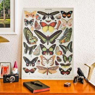 Affiche Papillons