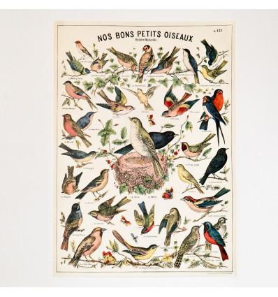 Affiche Oiseaux rétro vintage - Cavallini & Co